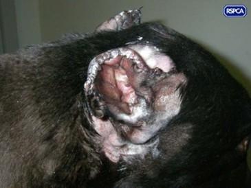 attacked greyhound 7 -insp ian smith 24.jpg2