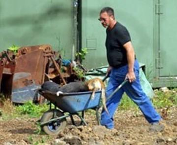 destruction of greyhounds 2