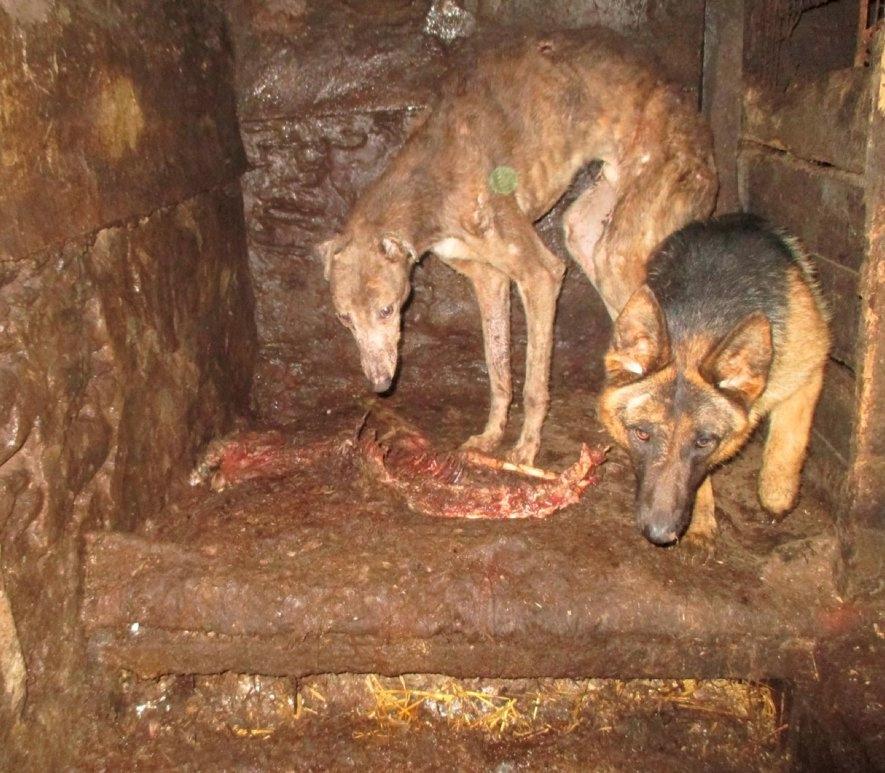 dog with carcass