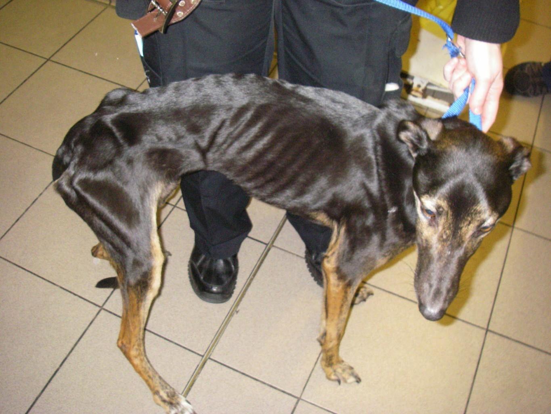 seaham greyhound2